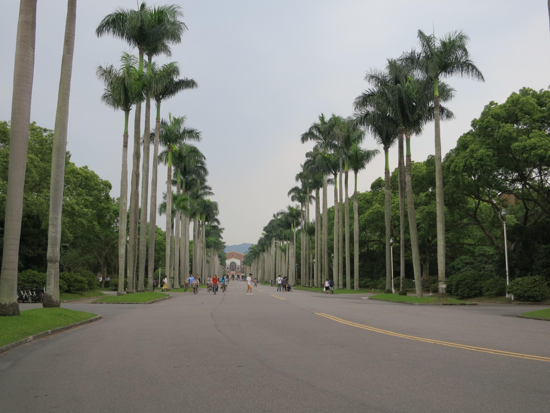 向著日出方向的椰林大道,盡頭就是新總圖書館。