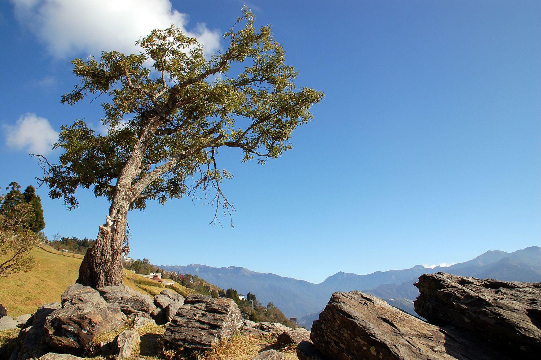 《像山一樣思考》:傾聽大自然的原鄉呼喚