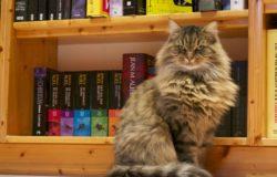 不要變成書店奧客——請「當下購買」!