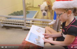 reading to shelter dogs