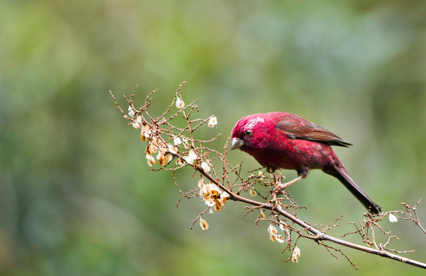 台灣經典賞鳥路線:出發賞鳥去!鳥類觀察與攝影的實戰祕笈