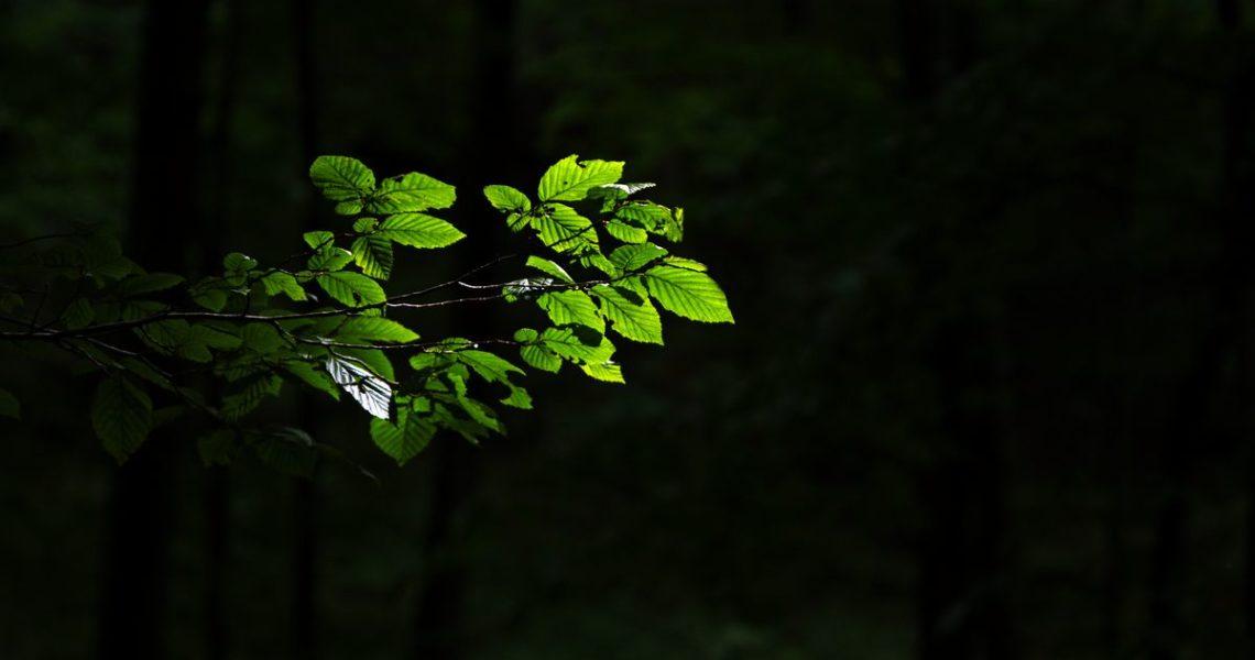 【果子離群索書】藍色大門外那株向光植物