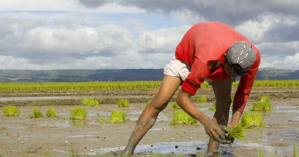 【祁立峰讀古文撞到鄉民】文青與小農從古代就在吵了啦!——孟子與農家