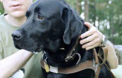 【朱家安不要偷懶了】為什麼我認為導盲犬協會歧視同志