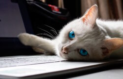 搞笑諾貝爾獎無奇不有:防止貓咪霸佔你的鍵盤