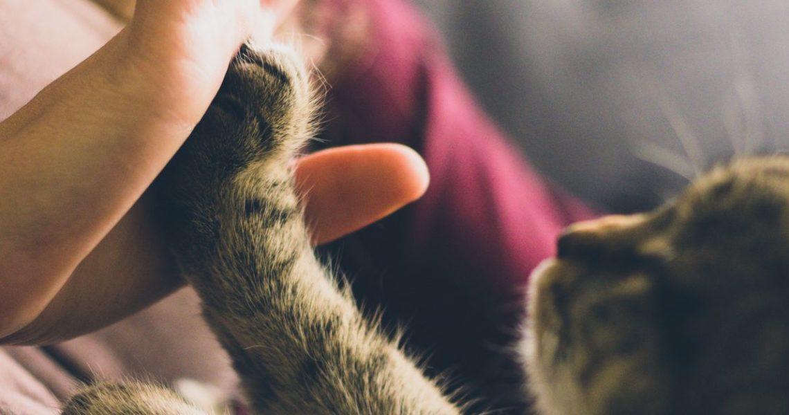【GENE思書軒】討摸的貓咪與哀傷的鸚鵡
