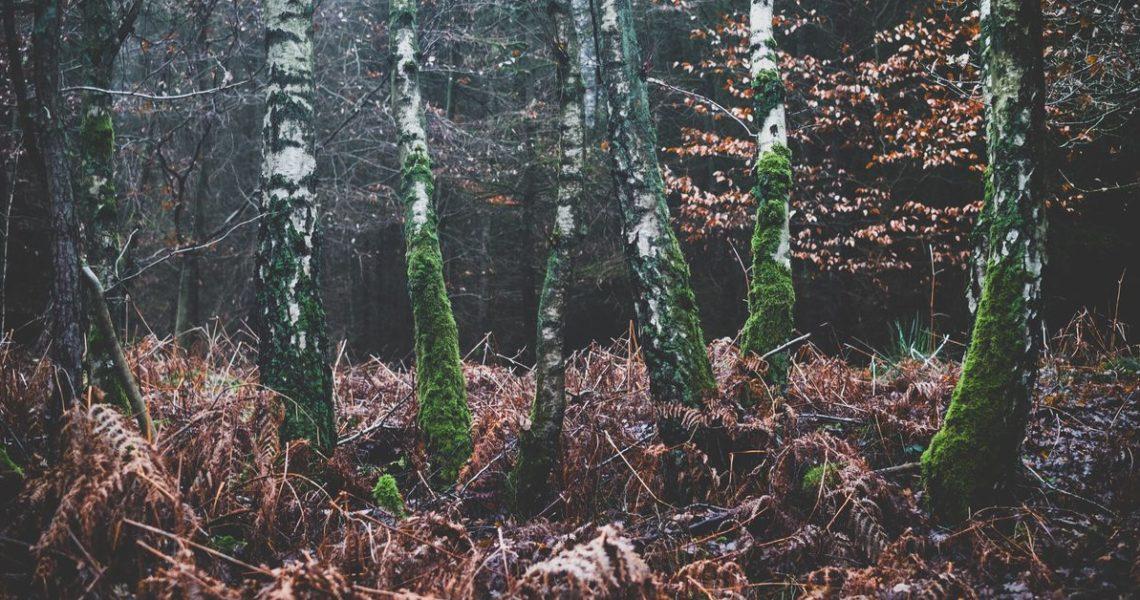 【GENE思書軒】樹木之間有語言、有鬥爭,還有網際網路和教養守則?