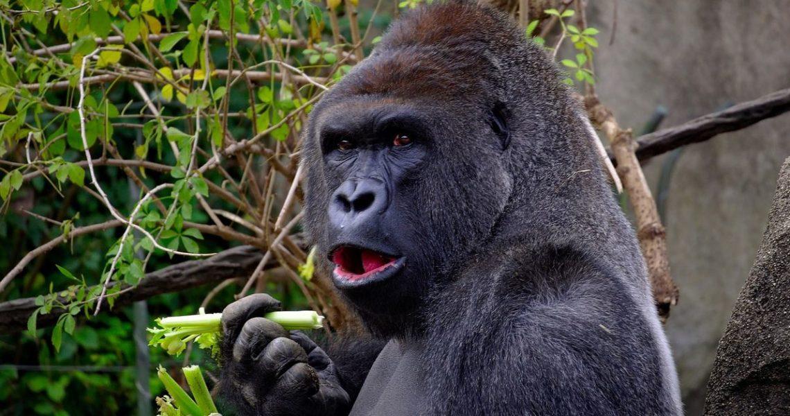【朱家安不要偷懶了】電車問題中你不願意把人推下月臺,那如果是推猴子呢?