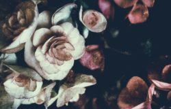 【果子離群索書】走路時看花,便走進沾染幻象色澤的現實──讀《花都開好了》