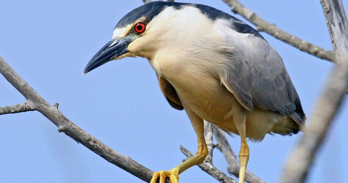 【果子離群索書】愛、孤獨、生命的困境與突圍的姿態──關於一隻失眠的鳥