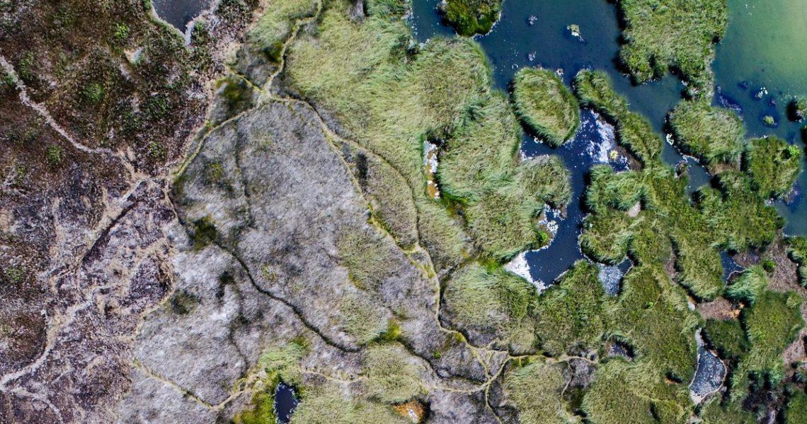 【GENE思書軒】從台灣一個破壞生態的工程,看學者用半個地球拯救世界的計劃