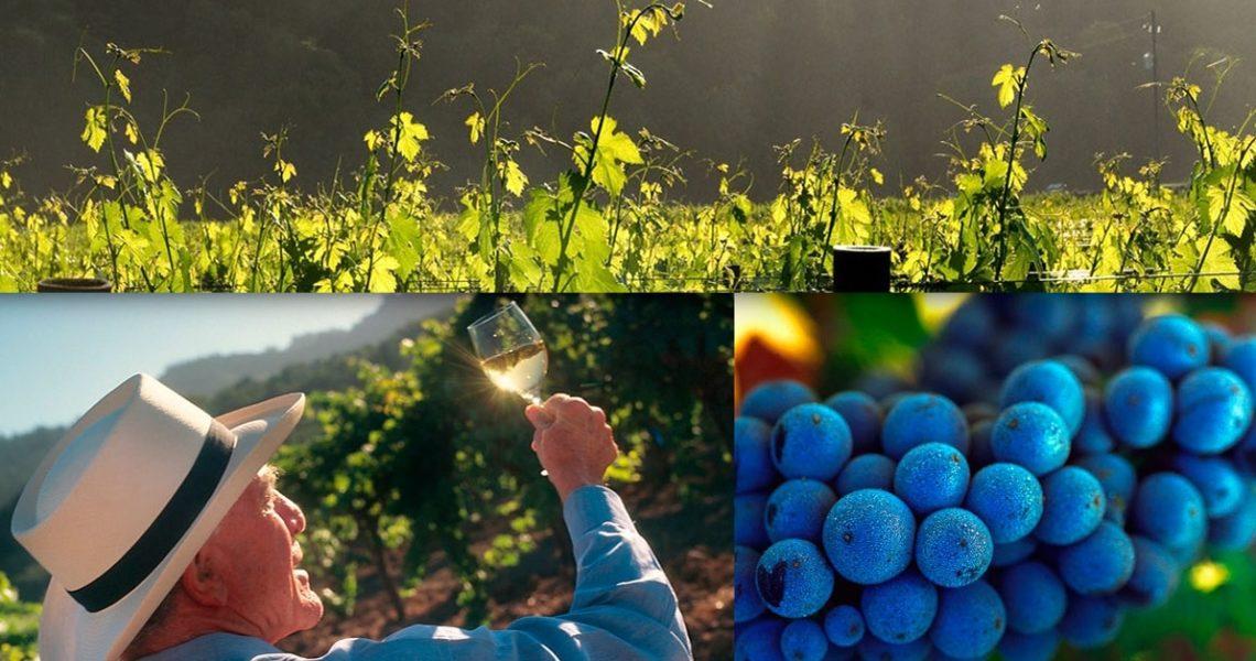 Napa之父 加州葡萄酒傳奇(上)