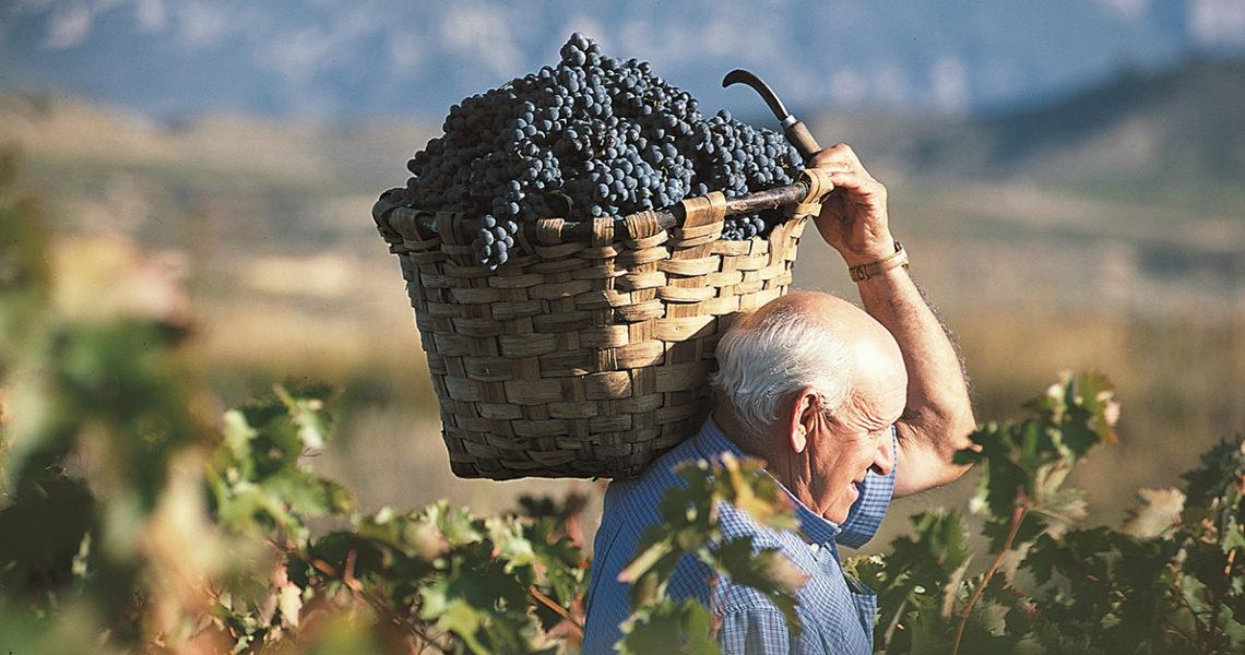 西班牙最著名產區——認識當地葡萄之王Tempranillo與其他品種 Part 2