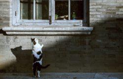 【果子離群索書】愛玩別家老鼠的貓、愛哭的牛,還有愛養雞愛台灣的新彊大媽