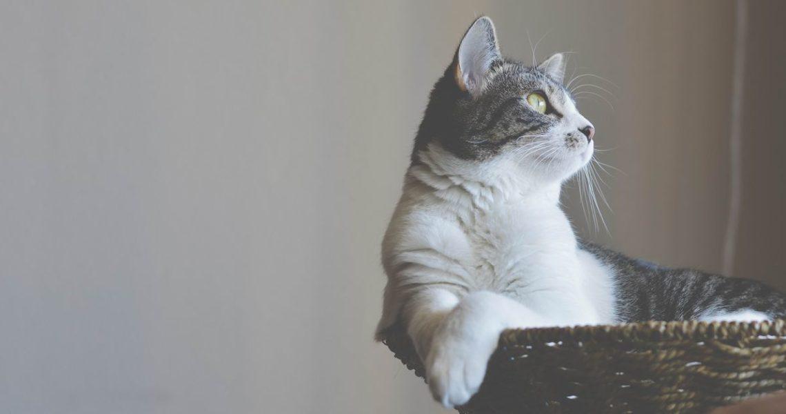 【祁立峰讀古文撞到鄉民】讀古文撞到貓奴──愛貓詩人與他們的贈貓詩