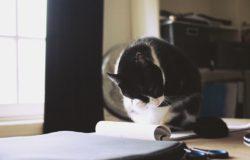 【一週E書】知道怎麼把推理小說寫好,也就會知道怎麼把其他小說寫好。