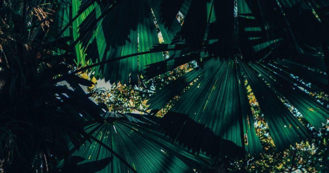 【GENE思書軒】你沒進過雨林,但你已經在雨林裡