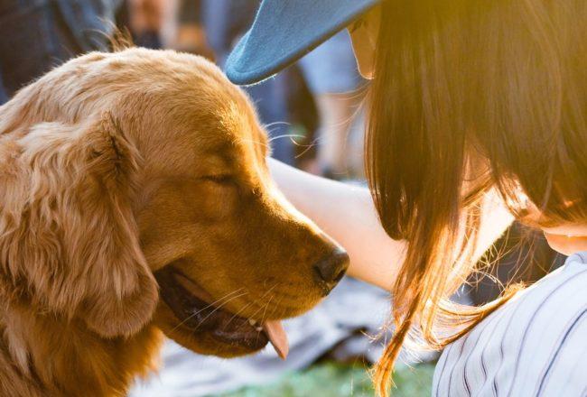【朱家安不要偷懶了】理解動物的理由