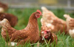 雞是天生的夜盲症患者,看民族風睡褲不順眼?