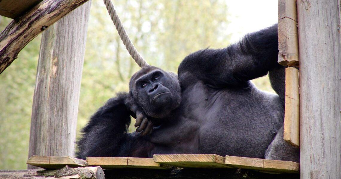 【GENE思書軒】看透那些好像講什麼都很有道理的猴子
