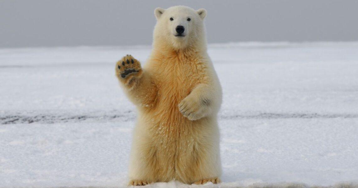 【朱家安不要偷懶了】穿太露跟熊賽跑
