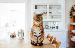 「左邊是床,右邊是貓,前面是電視,後面是廚房。」——遠距工作,你需要創造儀式感