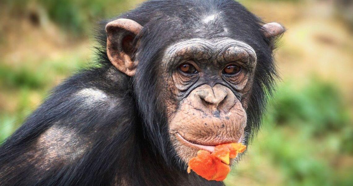 【GENE思書軒】那個擁抱會讓你相信:動物也有喜怒哀樂