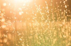 石黑一雄《克拉拉與太陽》專文推薦——科幻寓言的新浪漫主義