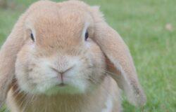 《找死的兔子:再見兔兔》台灣首次出版 疫情時代最有效的解憂處方箋