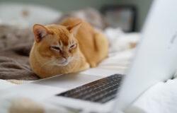 網路的世界是,常常不覺得電腦另一端是活生生的人