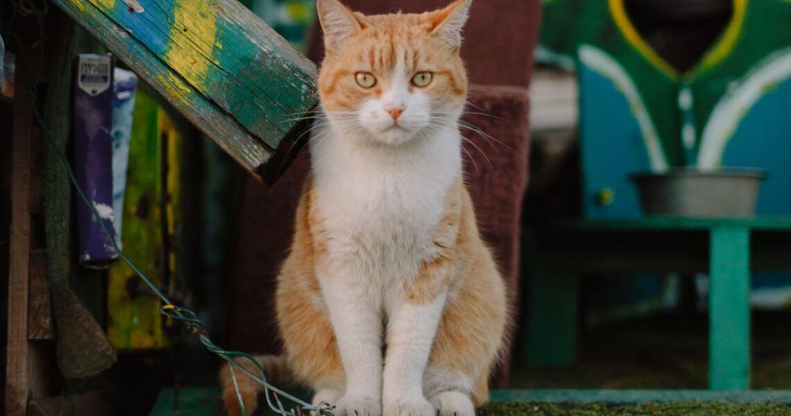 【讀者舉手】「告別」是一門需要練習的功課──文字、漫畫及生活裡的貓
