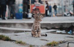【果子離群索書】唯因貓在,妳感覺尚有一絲生而為人的資格